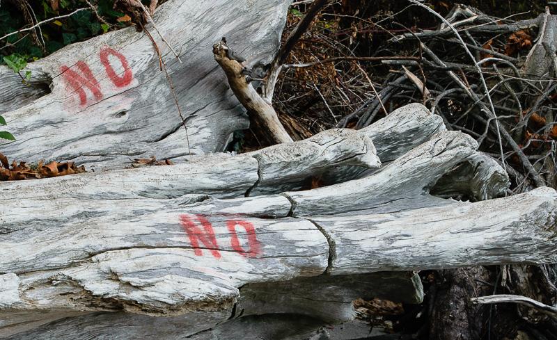 no log
