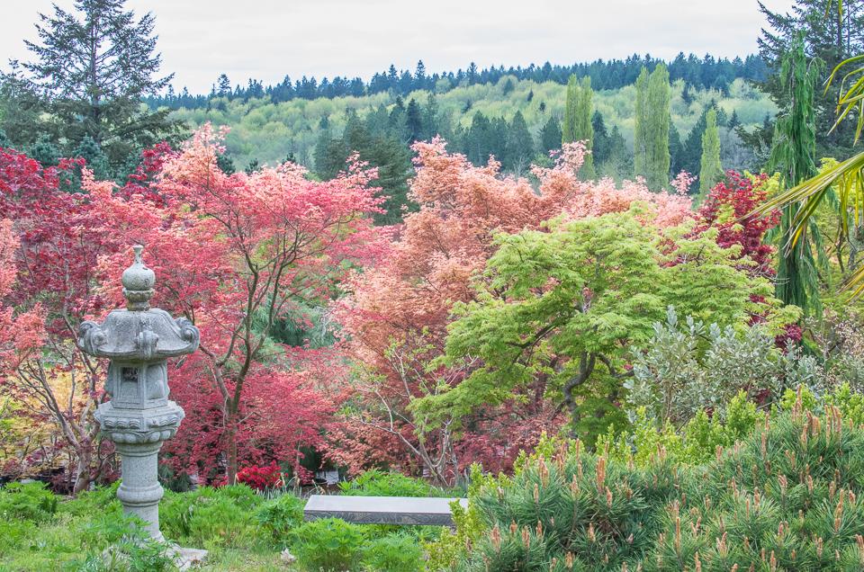 Yangs spring 2016 55-4688